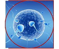 آزمایش آنالیز اسپرم٬ آزمایش آنالیز اسپرم یا اسپرموگرام٬ آنالیز اسپرم٬ اسپرم٬ اسپرم شناسی٬ انواع اسپرم٬ بررسی احتمال ناباروری در مردان٬ تحرک اسپرم٬ حجم مایع منی٬ خودارضایی٬ روابط زناشویی٬ مایع منی٬ منی در مردان٬ مورفولوژی یا شکل اسپرم٬ نتایج آزمایش آنالیز اسپرم٬ هورمونهای مردان