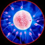 آزو اسپرمی چیست؟